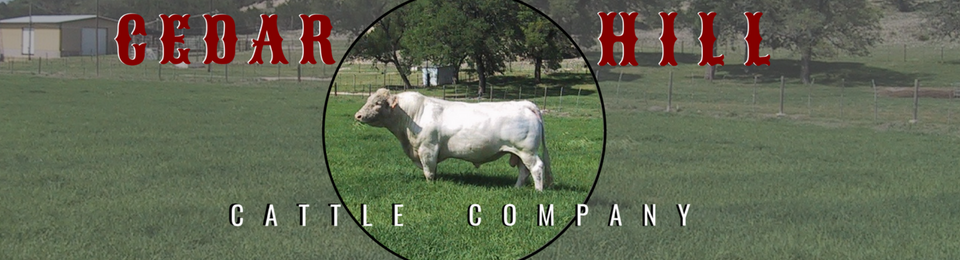 Cedar Hill Cattle Company